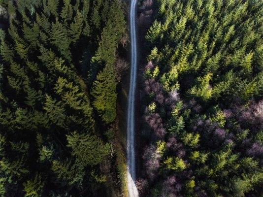 Plymbridge Woods, UK