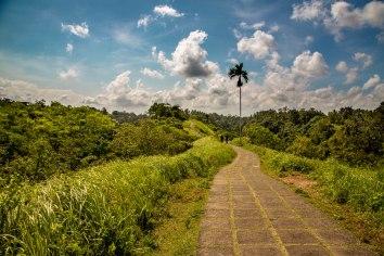 Campuhan Ridge Walk, Ubud