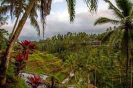 Tegallalang Rice Terraces, Ubud