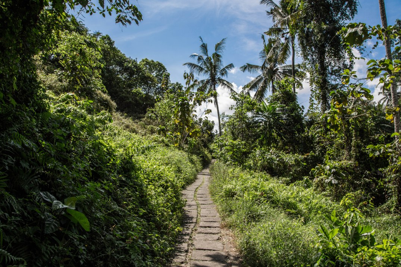 Campuhan Ridge Walkway